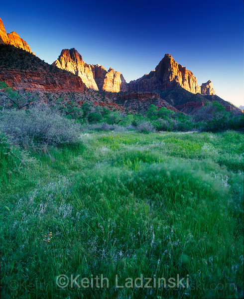 zion national park, sunset, spring