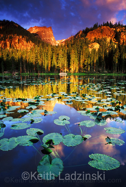 Lilly pads occupy Nymph Lake and reflect Hallets Peak at sunrise on a spring morning in Rocky Mountain National Park in Colorado.
