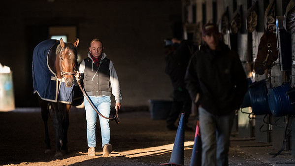 Quip walks the shedrow at Keeneland 4.18.18.