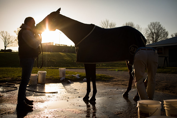 Quip, Kentucky Derby Contender, is having his legs washed by Rodolphe Brisset's grooms.
