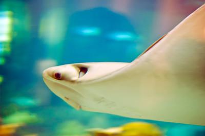 Underwater Flyer