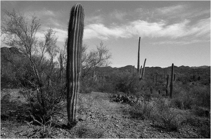 Tucson Arizona April 2008 Saguaro NP 1,
