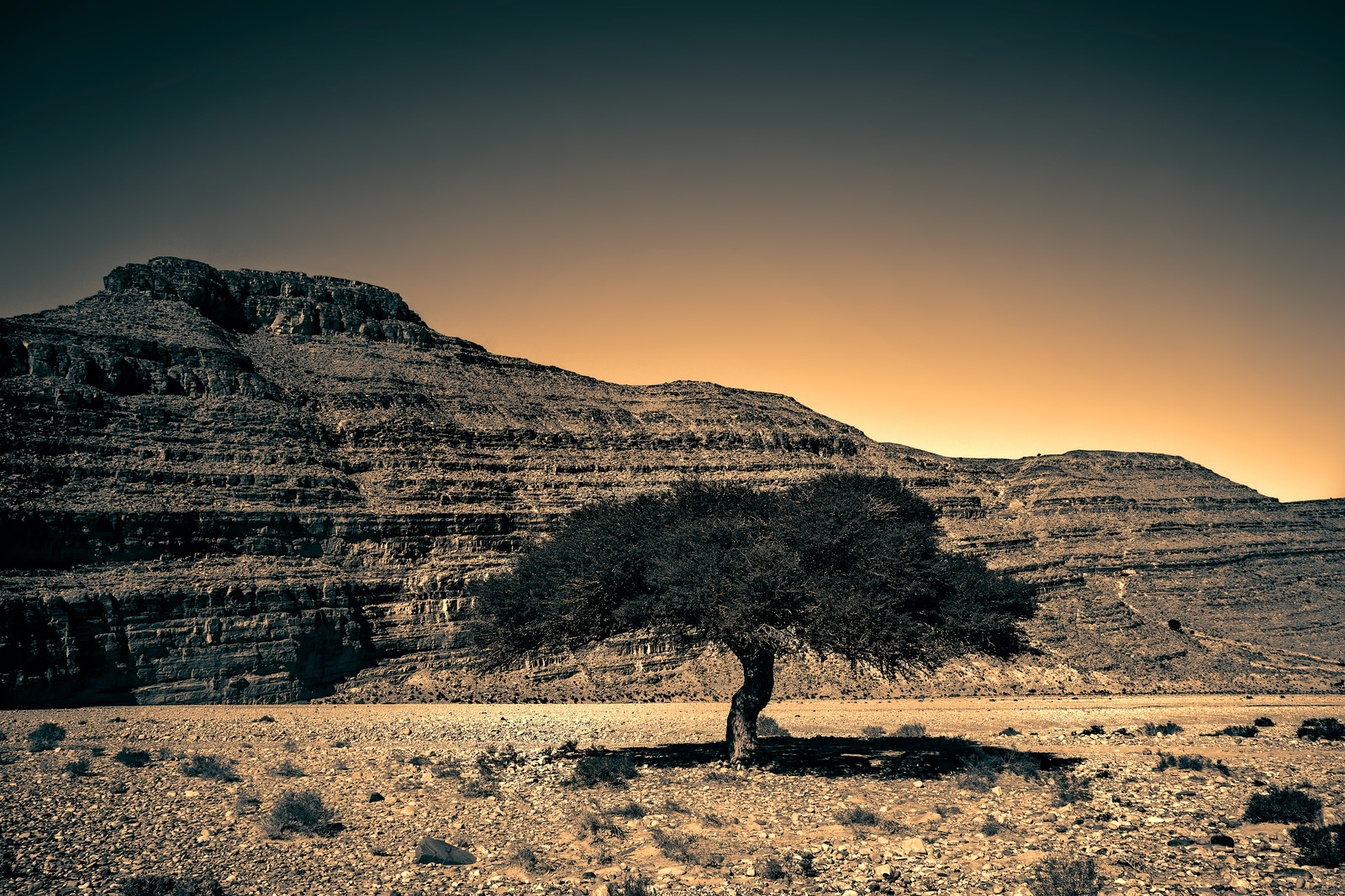 Lone Argan Tree in Southern Morocco artistic photography from Kevin Wenning at Intentionally Lost #intentionallylost