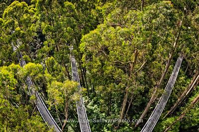 Canopy Pathways