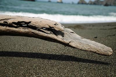 Day 3.1 Goat Rock Beach 261- XE