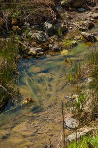 Serpentine Loop Trail-0054
