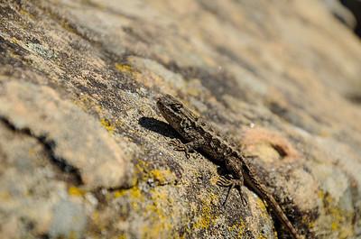 Ridge Trail (Ipawii?) 042213-0064