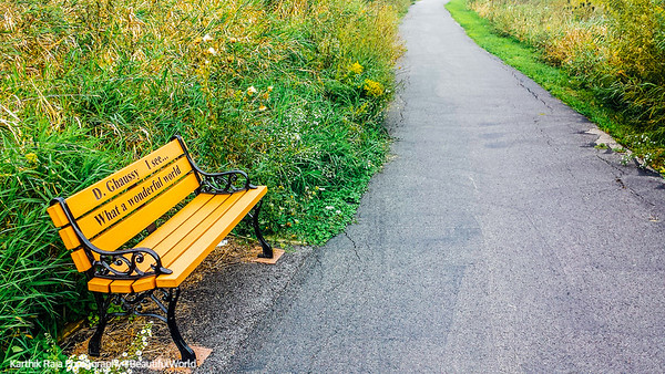 Bench, Barrington Park, Illinois