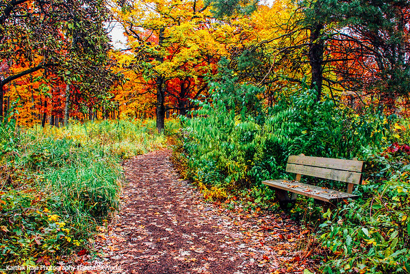 Morton Arboretum, Lisle, IL