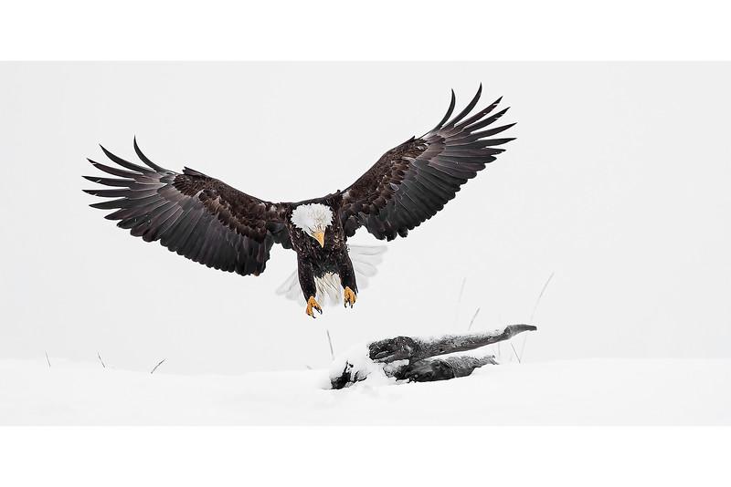 Landing Wings Wide