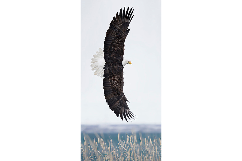 Wing Span