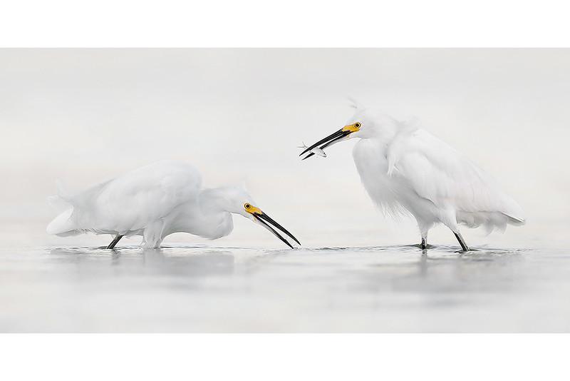 Hunters In White