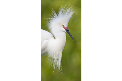 Elegant Feathers
