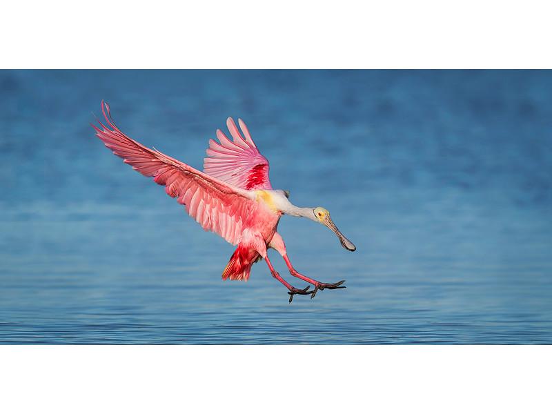 Pink Landing On Blue