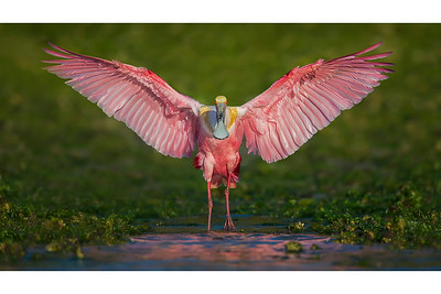 Flash Of Pink