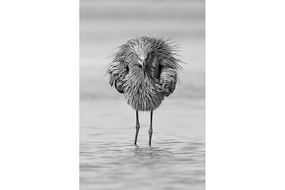 Angry Bird B&W