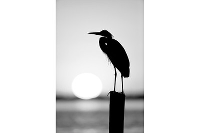 Sunset Silhouette B&W