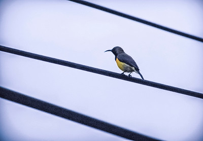 Bird on the Wire