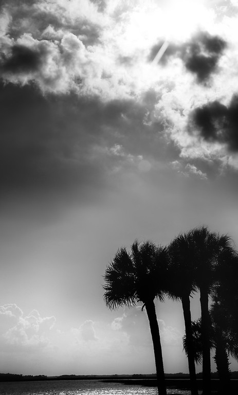 Palm trees on the shoreline at Folly Beach in South Carolina with Intentionally Lost and Kevin Wenning #intentionallylost