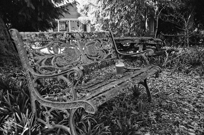 Our Garden 2020/03/14. Pentax Super, Konica Monochrome VX400 Film, Expired 2004.