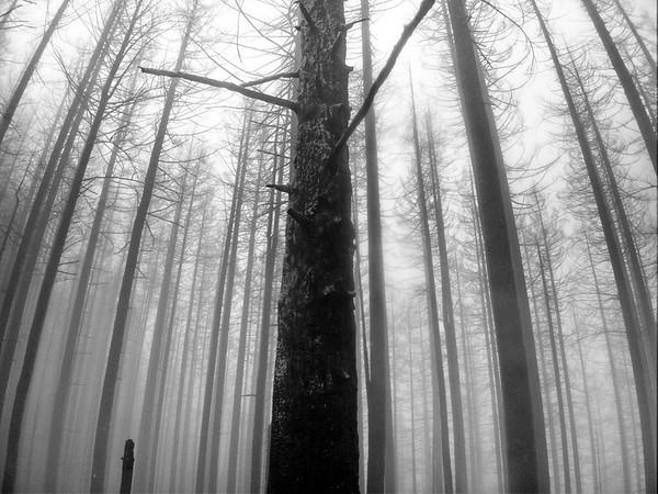 Franklin Ridge Loop © Chiyoko Meacham
