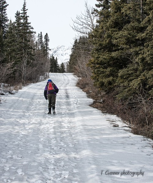 Taking the road less travelled: On foot up the original Alcan Highway