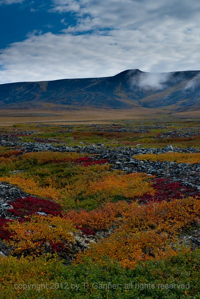 As the tundra turns, along the Richardson Mountains