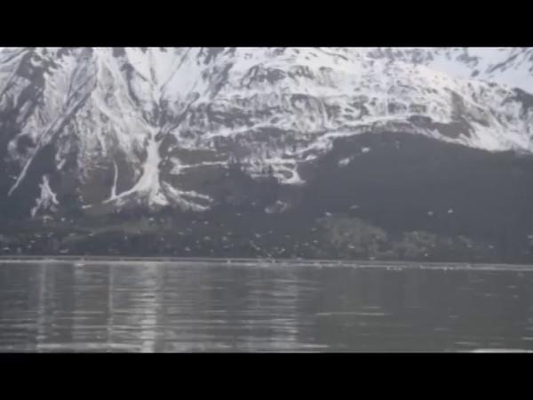 Video Clip - Gulls Gone Wild