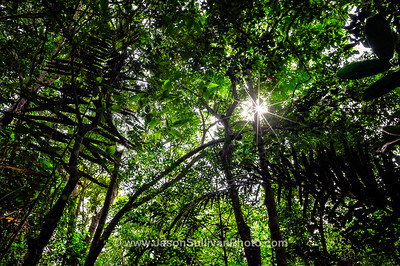 Amazon Jungle Shade
