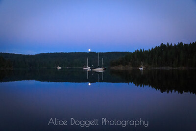 Moonset In Squirrel Cove, Cortes Island, B. C.