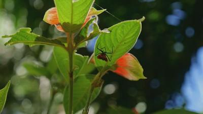 red bug hidding Osa, Costa Rica February 2021