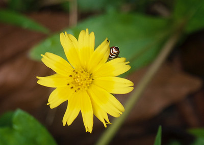 Hiding Bug
