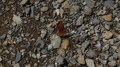 butterfly on beach