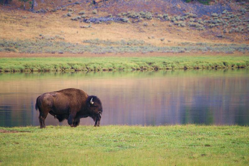 Bison River Bend