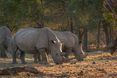 Multi Rhino