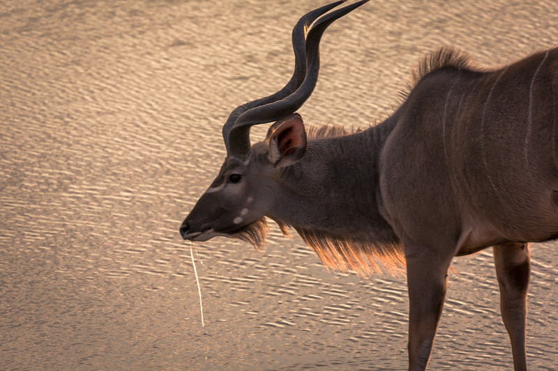 Water dripping, Kudu