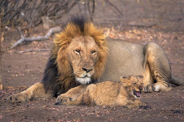 Dominate Male Teaching the Kids
