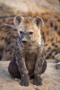 Hyena Pup Pose 2