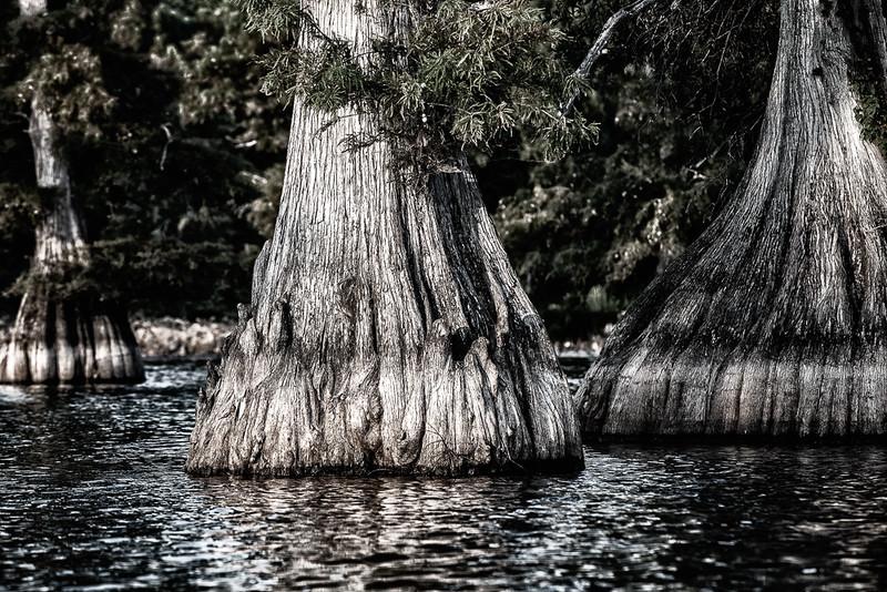 Cypress Trio