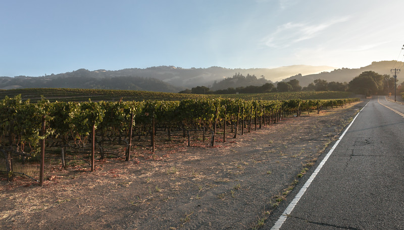 Sunset Driving in Sonoma