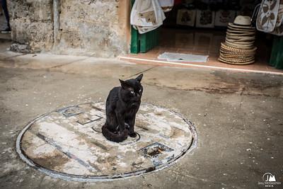 Senor Gato