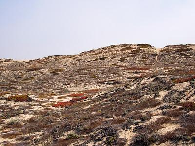 Marina Dunes Open Space Preserve, Marina, 2018.