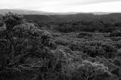 Fort Ord National Monument, 2019.