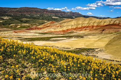 Painted Hills: A Magical Place In The Spring