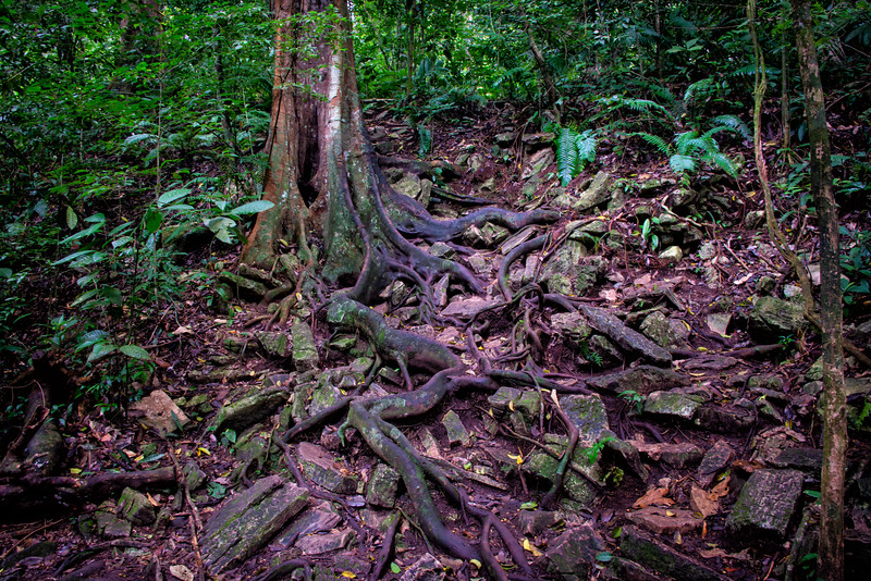 At the top of this root cluster was an entrance to a ruin entrance covered by the jungle. Not visible from the path, but climbing the roots gave me a decent view in the next photo.
