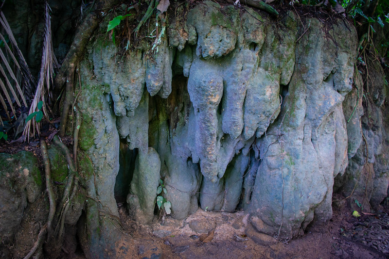 Calcified tree roots