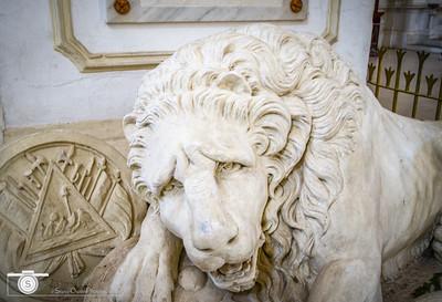 Lion Guards His Rest