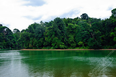 MacRitchie Reservoir - forest