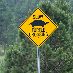 Custer State Park - turtle crossing