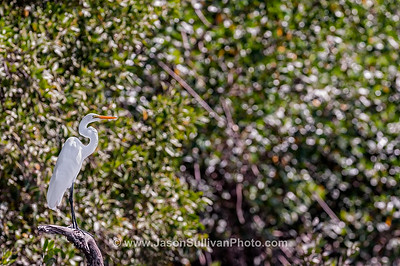 Mangrove Sentinel